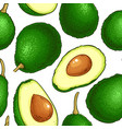 avocado fruit pattern on white background vector image