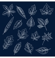 Chalk silhouettes of tree leaves vector image