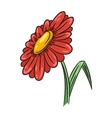 Daisy flower vector image vector image