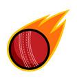 sport ball fire cricket vector image