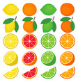 Citrus Set vector image