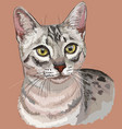 colorful egyptian mau cat vector image vector image