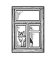 domestic cat looking out window sketch engraving vector image vector image