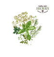 hand drawn background with herbs vector image vector image