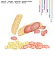 Peanuts Pods with Vitamin B3 B9 B1 B5 and E vector image vector image