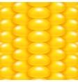 Yellow Corn Background vector image