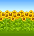 Sunflower field vector image