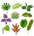 Set of stylized tropical plants and leaves vector image vector image