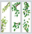 banner with green leaves on branch vector image