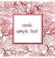 Card with red coral and frame for text vector image vector image