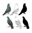 carriers pigeons domestic breeds sports birds vector image vector image