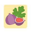 fig icon vector image vector image