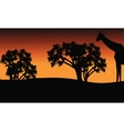 Silhouette of giraffe and trees on safari vector image vector image