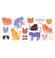collection of cute funny cats of various breeds vector image