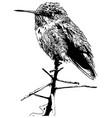 hummingbird on a branch vector image