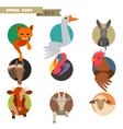 Farm animals avatars vector image