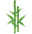 bamboo branches vector image vector image