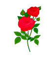 beautiful rose flower design decoration nature vector image