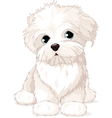 Maltese Puppy Dog vector image vector image