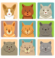 different cats avatars and expression vector image