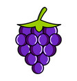 isolated grapes icon vector image