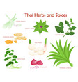 thai herbs and spices seasoning vector image