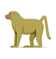olive baboon animal standing on a white background vector image vector image