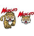 wildcats mascot vector image vector image
