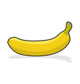 Yellow ripe banana on white background Tropical vector image