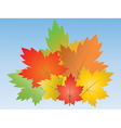 bouquet of maple leaves vector image