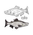 hand drawn coho fish black and white and color vector image vector image