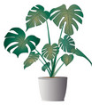 monstera deliciosa with pot vector image vector image