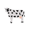 black and white spotted cow for agricultural farm vector image vector image