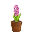 hyacinth icon vector image vector image
