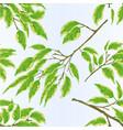seamless texture tropical plant ficus benjamina vector image vector image