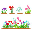 summer and spring blossom forest and garden vector image vector image