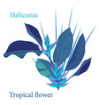 branch tropical heliconia flower leaves vector image vector image