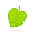 green tree leaf vector image