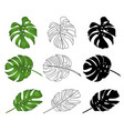 philodendron tropical jungle leaves vector image vector image