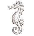 seahorse isolated underwater animal sketch marine vector image vector image