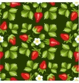 Strawberries seamless hand drawn pattern vector image vector image