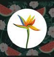 tropical flowers cartoon vector image vector image
