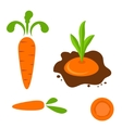 Carrot set in different styles vector image