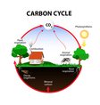 carbon cycle vector image