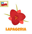 imape of lapageria flower symbol of chile vector image