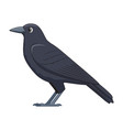 raven bird on a white background vector image vector image
