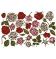 set hand drawn colored roses vector image