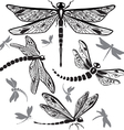 Set of decorative dragonflies vector | Price: 1 Credit (USD $1)