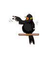 talkative hill myna bird vector image
