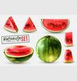 watermelon realistic transparent set vector image